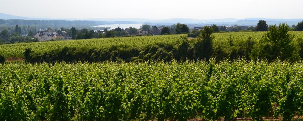 Weingut Leon Gerhard, Weingut Hattenheim